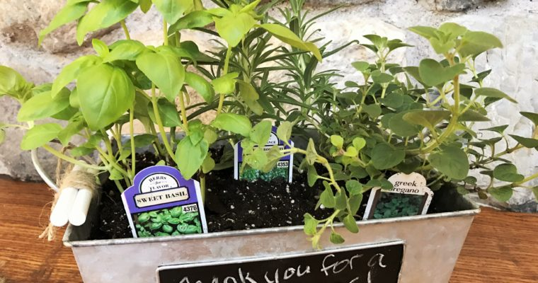 Mini Herb Gardens for Gifts or Just for Fun!