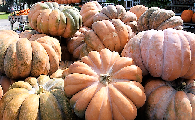 Beautiful Varieties of Pumpkins