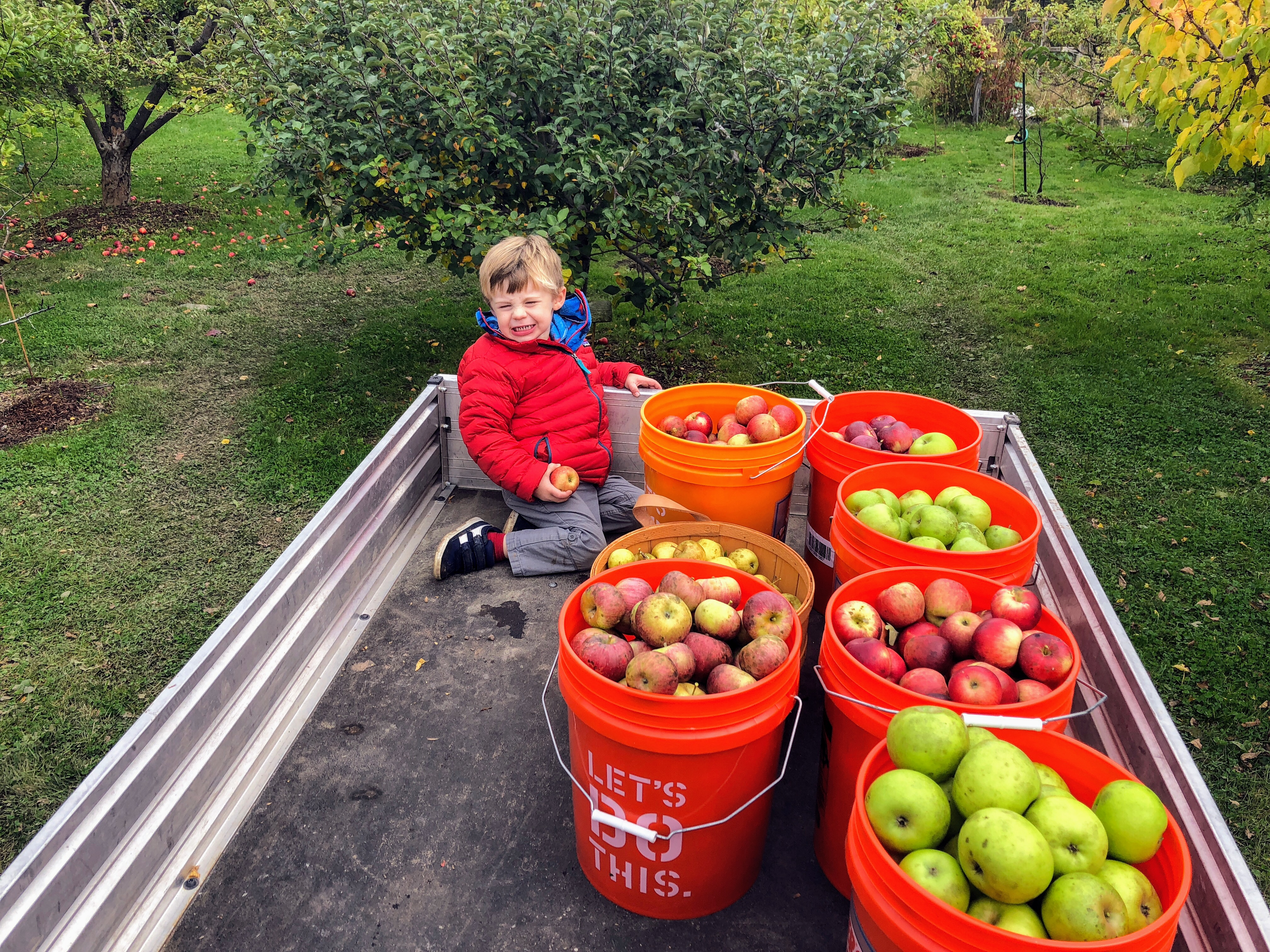 15 Things to Do With All the Apples You Need to Pick Before It Freezes!